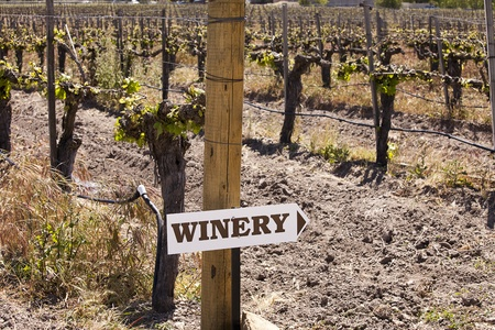 trellis: Directions to a winery are posted on one of the end posts in a vineyard with grapevines trained to the trellis wires in the background. Stock Photo