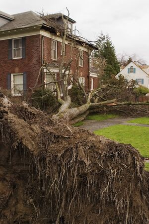 Seattle, Washington - December 15, 2006:  A tree fell on a house in Seattle during the Hanukkah windstorm of 2006.