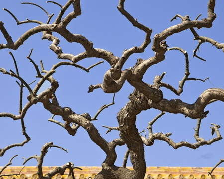 people's cultural palace: The leafless, gnarly branches of an ornamental tree in front of the gates to the People Stock Photo