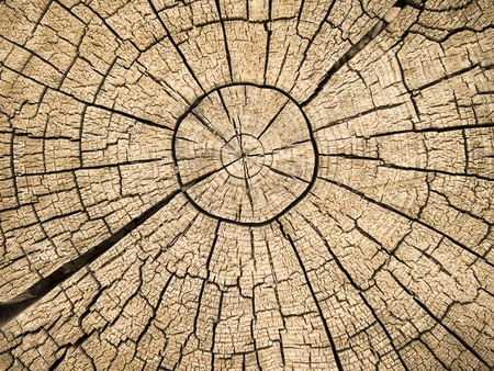 An old tree stump shows cdracks and fractures radiating from the center that have resulted from the natural weathering from being left in the open air.  Stock Photo