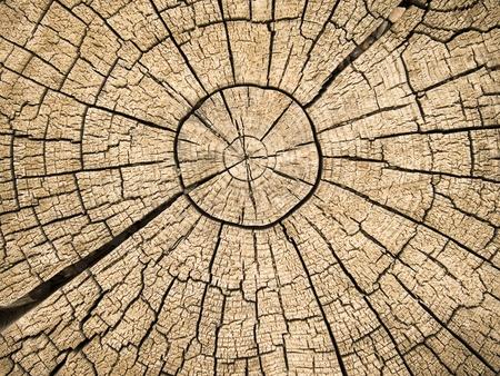 Een oude boomstronk laat zien cdracks en fracturen die uitlopen van het centrum dat het gevolg zijn van de natuurlijke verwering van wordt gelaten in de open lucht.