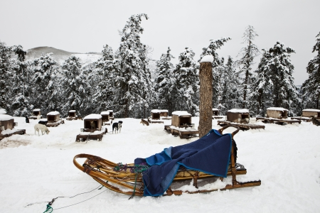 sled dog: A traditional wood sled with blue blanket is ready to be harnessed with dogs for a run in the winter  The sled dog kennels are in the background  Stock Photo