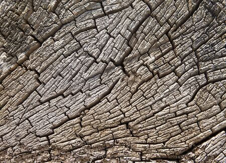 driftwood: An old, weathered tree stump shows the effects of the elements  The texture results from small cracks in the typical tree ring pattern  Stock Photo