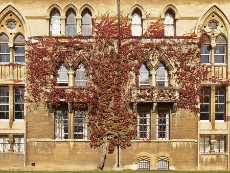ivy wall: Oxford, England - October 14, 2011: An ivy plant grows up the wall of one of the walls of Christ Church College in Oxford, England. The leaves of the vine have turned red with the onset of autumn. Editorial