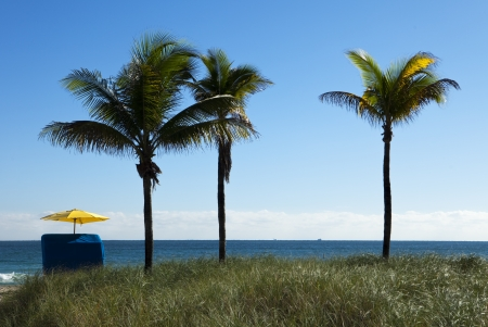 three palm trees: A single umbrella on the beach located next to three palm trees provides solitude and quiet during vacations.