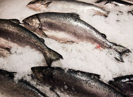 A variety of fresh salmon at a fish market is neatly displayed on a bed of chipped ice. photo