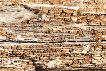 A close up view of a section of driftwood rotting on a beach in the San Juan Islands