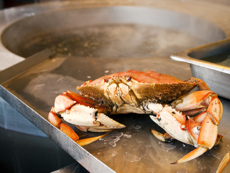 boiling: A fresh Dungeness crab, just boiled in hot water, is waiting on the stainless steel counter to be cracked and eaten