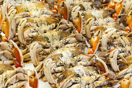 pike place market: Many Dungeness crab carefully displayed at a showcase wall at the Pike Place Market in Seattle, Washington