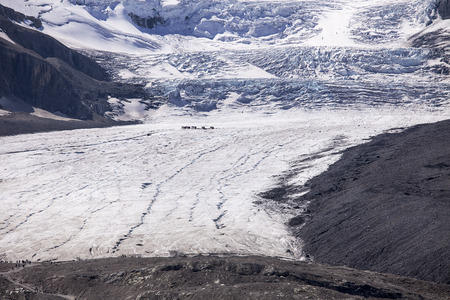 glacial: The Athabasca Glacier is formed from the ice fall coming from the Columbia Ice Field. The scale is enormous; to show the scale, there is a group of trucks and people in mid-glacier and a second group at the tongue of the glacier. The glacier is said to be