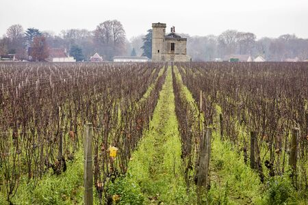 outbuilding: The Clos de Vougeot vineyard in Burgundy is planted with pinot noir grapevines. The stone barn is a typical outbuilding for the area.