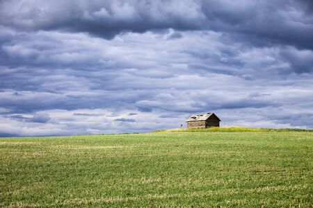 A small farm outbuilding in the middle of a grain field sits on top of one of the rolling hills in the Palouse area of Eastern Washington. Stock Photo