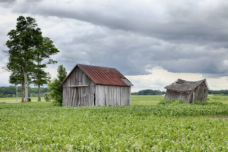 outbuilding: Two old, weathered farm sheds stand in the middle of a corn field on cloudy summer day on a farm in Ohio.