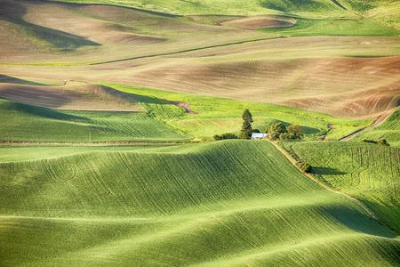 ファームおよびワシントン州のパルース地域の真ん中に、牧場は、小麦と穀物のフィールドで覆われたなだらかな丘を披露します。