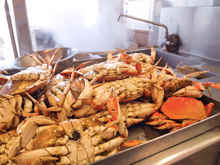 dungeness: Many Dungeness crabs, freshly cooked in boiling water, are cooling off in a kitchen and waiting to be served.