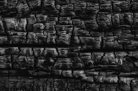 burn: A natural abstract pattern of a wood  log burned in a fire creates a black and white tetured background.