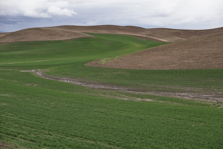 Wheat fields in the Palouse area of Eastern Washington follow the contours of the rollhing hills to maximize the growing area for crops. Stock Photo