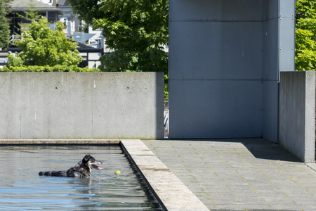 Summer heat dog resting in reflecting pool