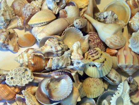 collected: pile of seashells collected on  Florida beach