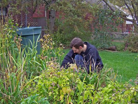 young man working pulling weeds in backyard