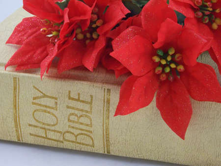 red poinsettias on top the holy bible