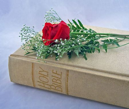 the holy bible with one red rose photo