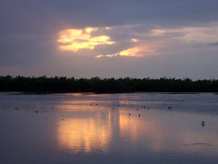 wading: wading birds at wildlife refuge at dusk Stock Photo