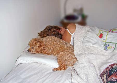 doze: poodle enjoying her favorite sleeping spot on pillow