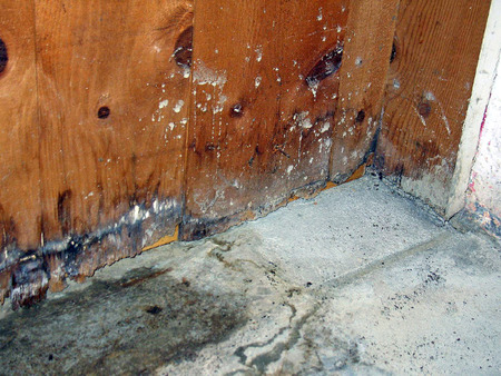 Schimmel-und Wasserschäden von Keller Leck Standard-Bild