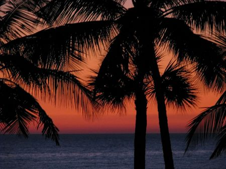 Una hermosa puesta de sol (amanecer) sobre el océano, palmeras tropicales siluetas. Sanibel Island Florida.