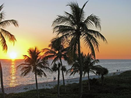 A beautiful sunset sunrise over the ocean, tropical palms silhouettes. Sanibel island Florida.