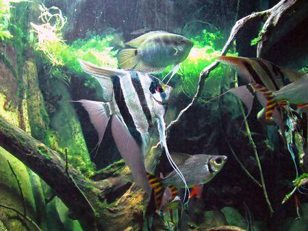 vividly: photo of tropical fish in an aquarium Stock Photo