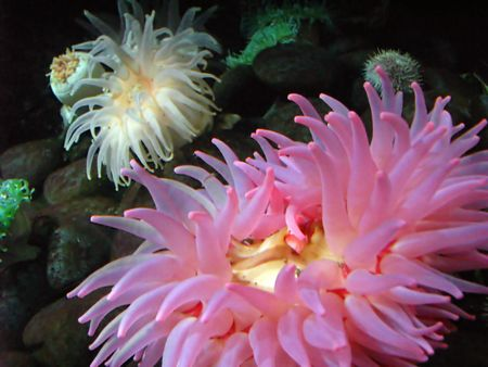 photo of colorful anemone in an aquarium