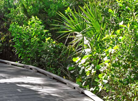 winding boardwalk Ding Darling Wildlife Refuge Florida Stock Photo - 3383361