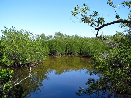 ding: Scenic Landscape Ding Darling Wildlife Refuge Florida Stock Photo