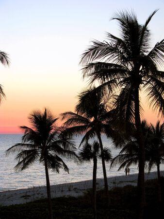 sunset over the ocean, tropical palms silhouettes. Sanibel Island Florida Stock Photo - 3395141