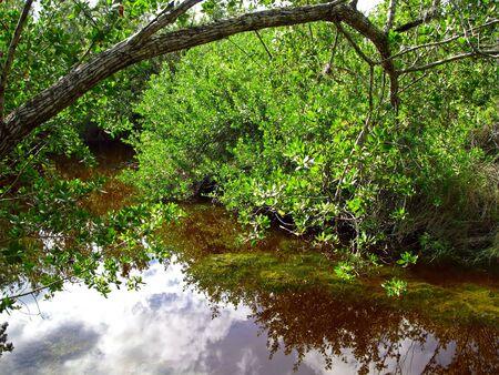 wildlife conservation: scenic landscape south Florida wildlife conservation park