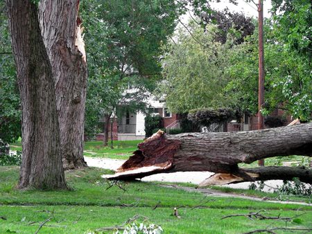 fallen tree: strong wind storm damage in Midwest neighborhood