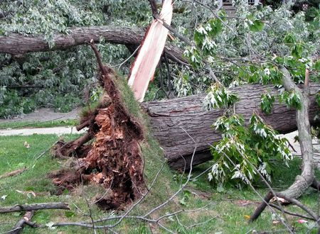 wind storm: strong wind storm damage in Midwest neighborhood