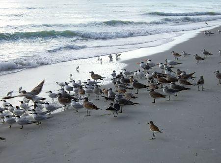 shorebirds on a Florida gulf coast beach