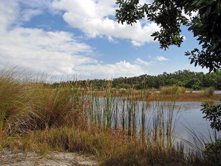 Scenic Landscape Ding Darling Wildlife Refuge Florida 스톡 콘텐츠