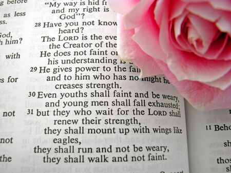 opened bible and one pink rose Isiah 40:31 Stock Photo