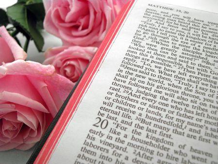 열린 성서와 핑크 장미 매튜의 책 스톡 콘텐츠