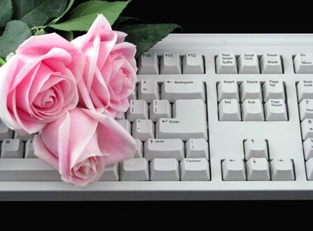 three pink roses on a computer keyboard photo