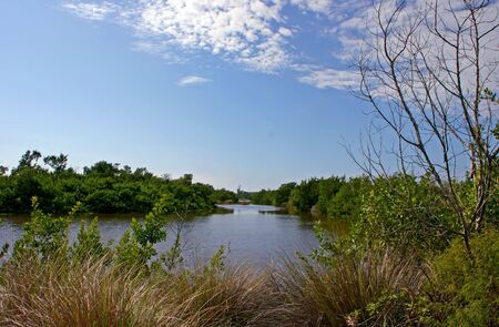 ding: Scenic Landscape Ding Darling Wildlife Refuge Sanibel Florida Stock Photo