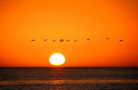 Birds In Flight Sunrise Sanibel Island Florida Stock Photo