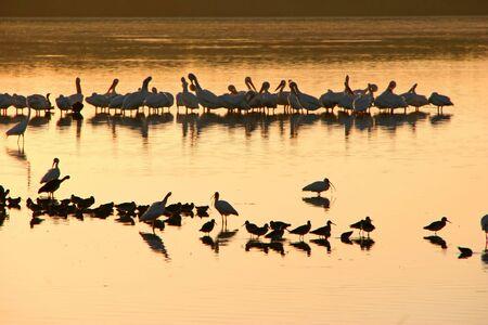 ding: Birds Silhouette Sunset Ding Darling Sanibel Florida