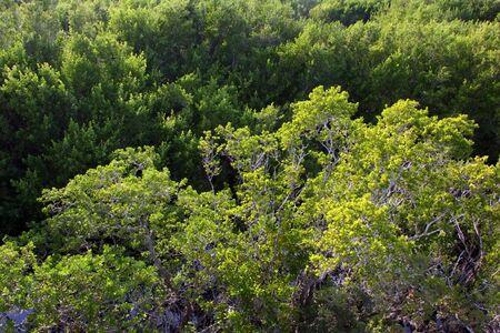 Aerial View Sanibel Captiva Conservation Foundation Florida Stock Photo - 6429998