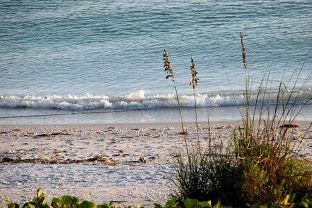 sea oats: sea oats and ocean Sanibel Island Florida
