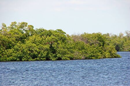 Scenic Landscape Ding Darling Wildlife Refuge Florida photo
